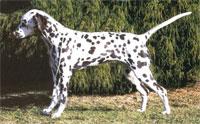 Boings Lola 2003 - 2011